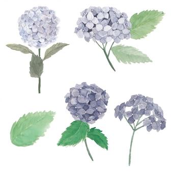 Insieme dell'illustrazione del fiore dell'ortensia dell'acquerello