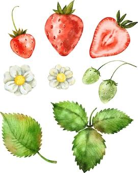 Acquerello illustrazione clipart bacca fragola rossa matura succosa e foglie verdi isolate su bianco