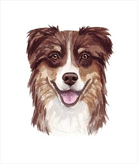 Illustrazione dell'acquerello di un cane divertente. popolare razza di cane. cane. pastore australiano. carattere fatto a mano isolato su bianco