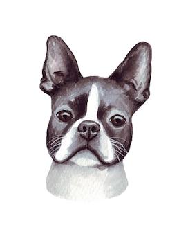 Illustrazione dell'acquerello di un cane divertente. razza popolare. cane boston terrier. carattere fatto a mano isolato su bianco