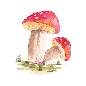 Illustrazione ad acquerello di una serie di funghi rossi disegnata a mano con acquerelli