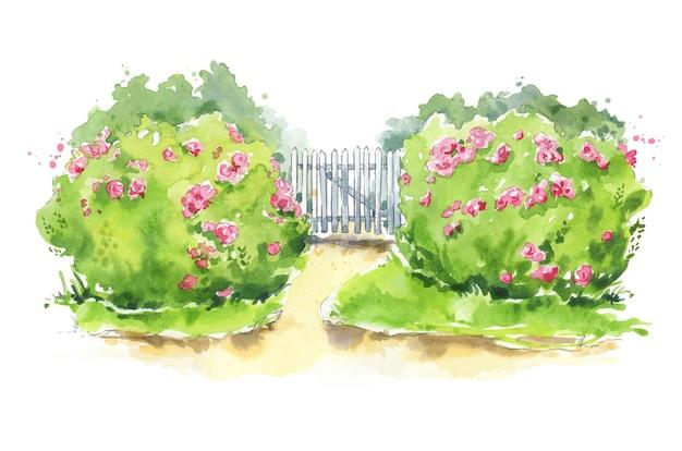 Illustrazione ad acquerello di un cancello da giardino in legno con cespugli di rose