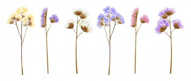 Fiori di statice isolati acquerello in molti colori dolci.