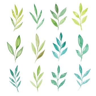 Collezione di foglie dell'acquerello isolato
