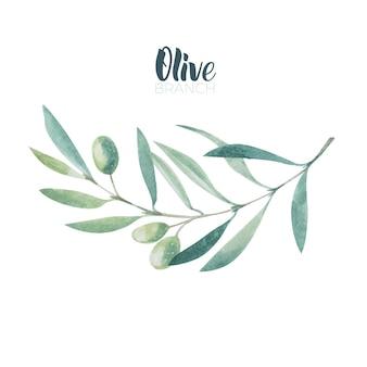 Ramo d'ulivo dell'acquerello. schizzo di ramo d'ulivo su sfondo bianco