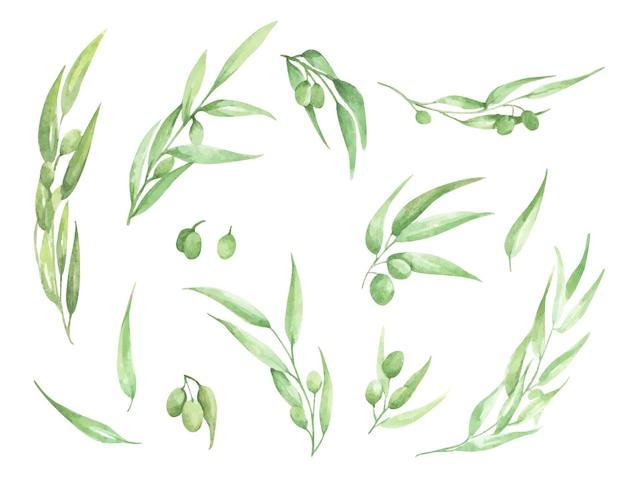 Ramo d'ulivo dell'acquerello con foglie e frutti illustrazione floreale