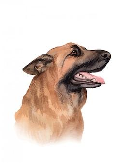 Illustrazione dipinta ad acquerello del ritratto del cane da pastore tedesco