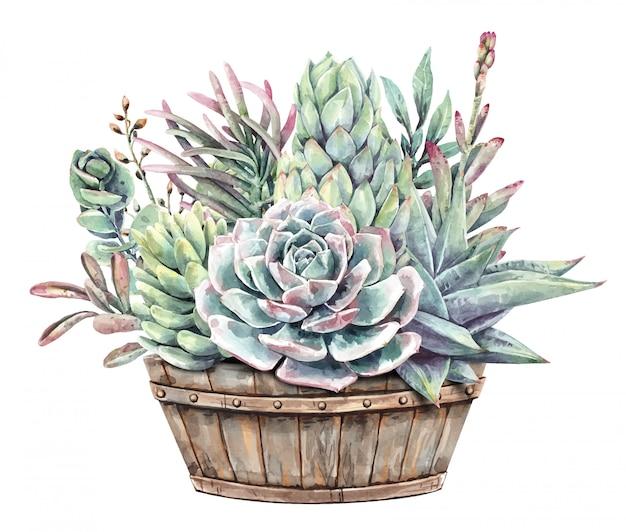 Pittura ad acquerello set di piante grasse con mezza fioriera botte di vino.