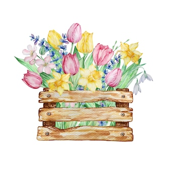 Fiori primaverili di pittura ad acquerello, scatola di legno con tulipani, narcisi e bucaneve.
