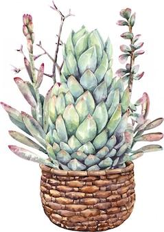 Pittura ad acquerello cactus succulenti e bouquet di cactus con vaso in pietra.