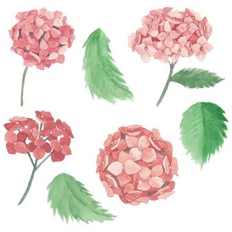 Collezione di elementi di fiori di ortensia rosa dell'acquerello