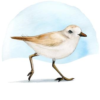 Uccello del piviere dell'acquerello sulla sabbia