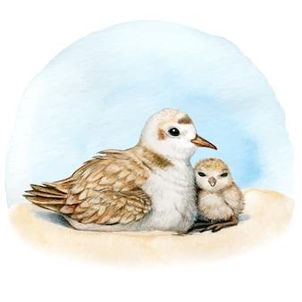 Nido di piviere dell'acquerello sulla sabbia madre e figlio