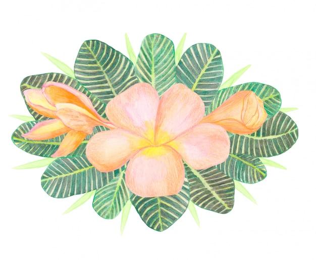 Fiori di plumeria dell'acquerello e bouquet di foglie verdi tropicali