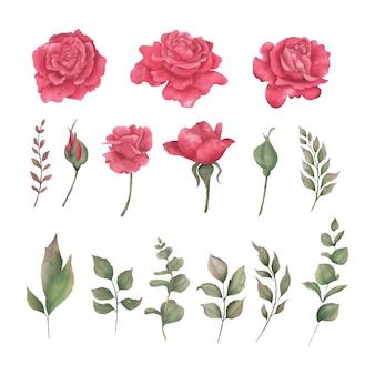 Elemento fiore rosa rossa dell'acquerello