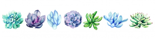 Insieme dell'acquerello delle piante grasse disegnate a mano luminose, disegnato a mano