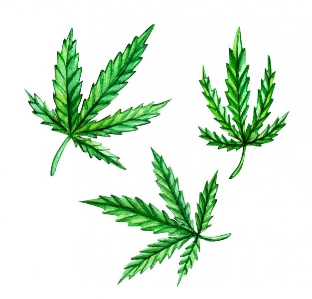Insieme dell'acquerello delle foglie della cannabis isolate su bianco.