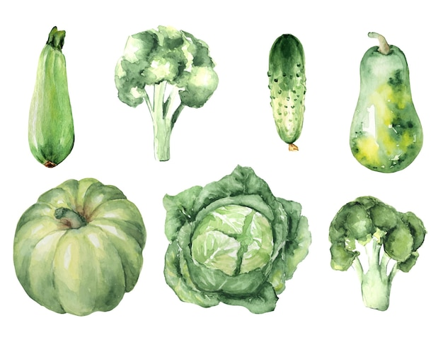 Set acquerello di verdure verdi: zucchine, cetrioli, cavoli, zucca, cavolfiori