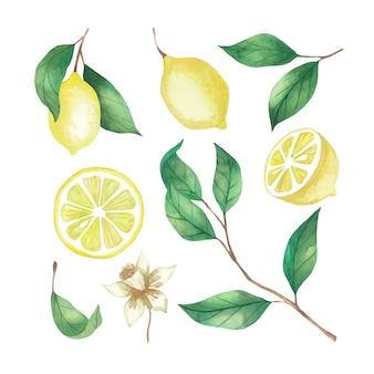 Insieme dell'acquerello di limoni, fette di limone e ramoscelli