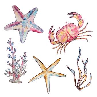 Insieme dell'acquerello alghe e coralli del granchio delle stelle marine di vita sottomarina marina