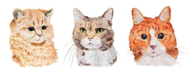 Serie di ritratti di gatti ad acquerello