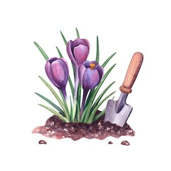 Croco di primavera dell'acquerello nel terreno e pala illustrazione botanica fiori di bucaneve viola e attrezzi da giardino isolati su sfondo bianco