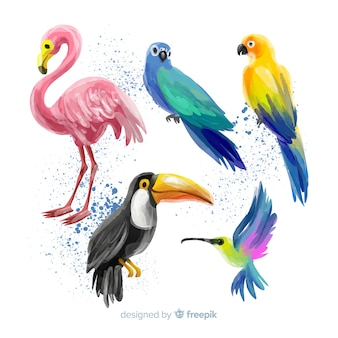 Collezione di uccelli esotici in stile acquerello Vettore Premium
