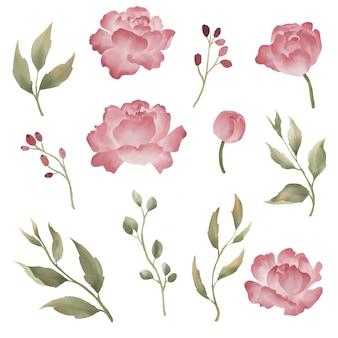 Collezione di elementi di fiori di peonia stile acquerello