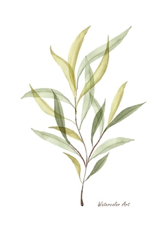 Foglie verdi trasparenti dell'acquerello rami isolati su priorità bassa bianca. acquerello botanico artistico dipinto a mano. perfetto per inviti, biglietti di auguri o decorazioni murali.