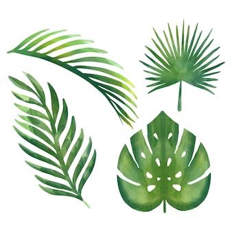 Set di illustrazioni floreali tropicali ad acquerello con foglie verdi per cancelleria di nozze, saluti, sfondi, moda, sfondi, trame, fai da te, involucri, cartoline, logo, ecc.