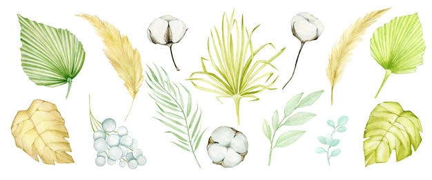 Insieme tropicale dell'acquerello con foglie di palma secche e illustrazione di erba di pampa