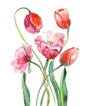 Pittura ad acquerello tulipani