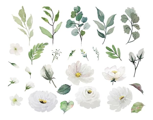 Set di fiori bianchi e foglie verdi dell'acquerello