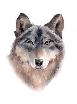 Illustrazione dipinta a mano del lupo dell'acquerello