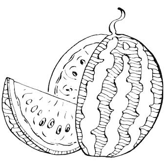 Disegno vettoriale di schizzo di anguria bacca disegnata a mano isolata su sfondo bianco bacca estiva