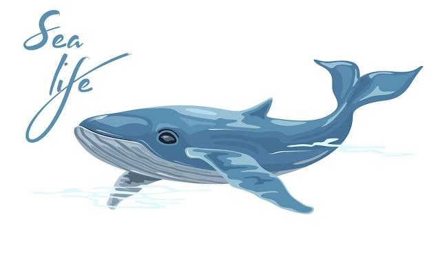 La balena è un mammifero marino placentare acquatico