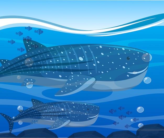 Squali balena e pesci sotto l'oceano