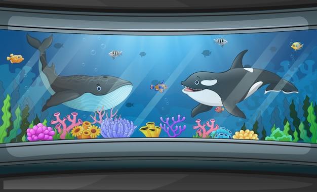 Balene che nuotano nell'illustrazione del carro armato dell'acquario