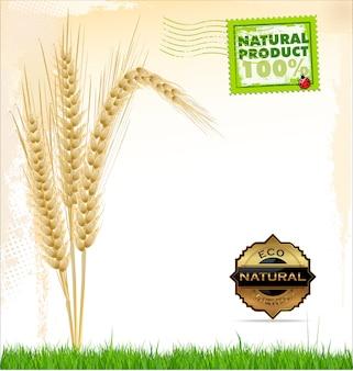 Sfondo di grano