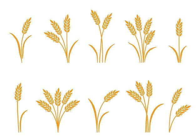 Disegnato a mano dell'icona del riso dell'orzo del frumento