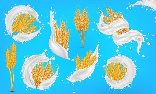 Chicchi di spighe di grano con latte spruzzato o yogurt.