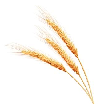 Spighe di grano con spazio per il testo.