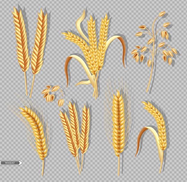 Raccolta del raccolto di grano