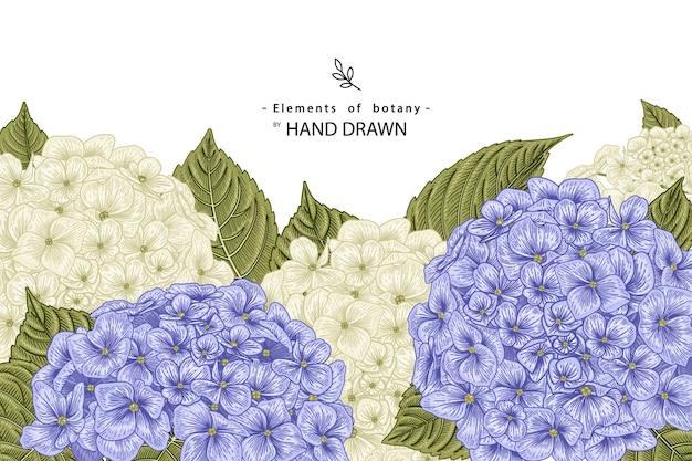 Illustrazioni disegnate a mano del fiore dell'ortensia bianca e blu.