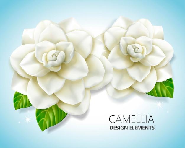 Elementi di camelia bianca, elegante floreale