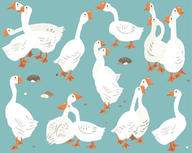 Collezione di specie animali di uccelli bianchi d'oca