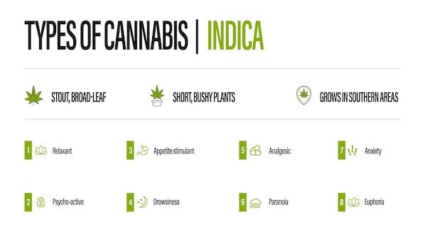 Poster informativo bianco dei tipi di cannabis con infografica. indica