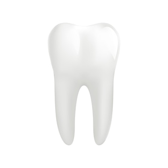 Dente molare bianco isolato su bianco