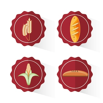 Progettazione di illustrazione vettoriale cibo prodotti di cereali integrali