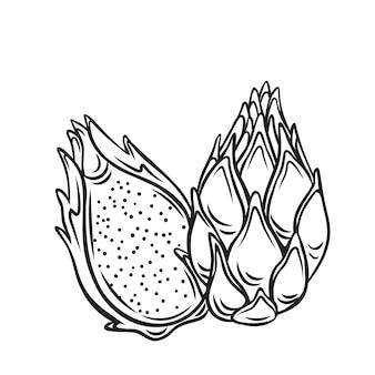 Intero e mezzo rosso pitaya frutti icona contorno, disegno illustrazione monocromatica. frutti estivi per uno stile di vita sano. frutta biologica.
